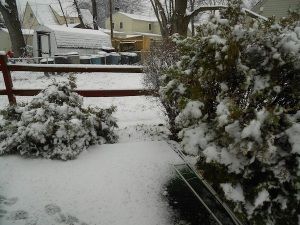 That little fence is a goner come spring, but it does look pretty in the snow :)