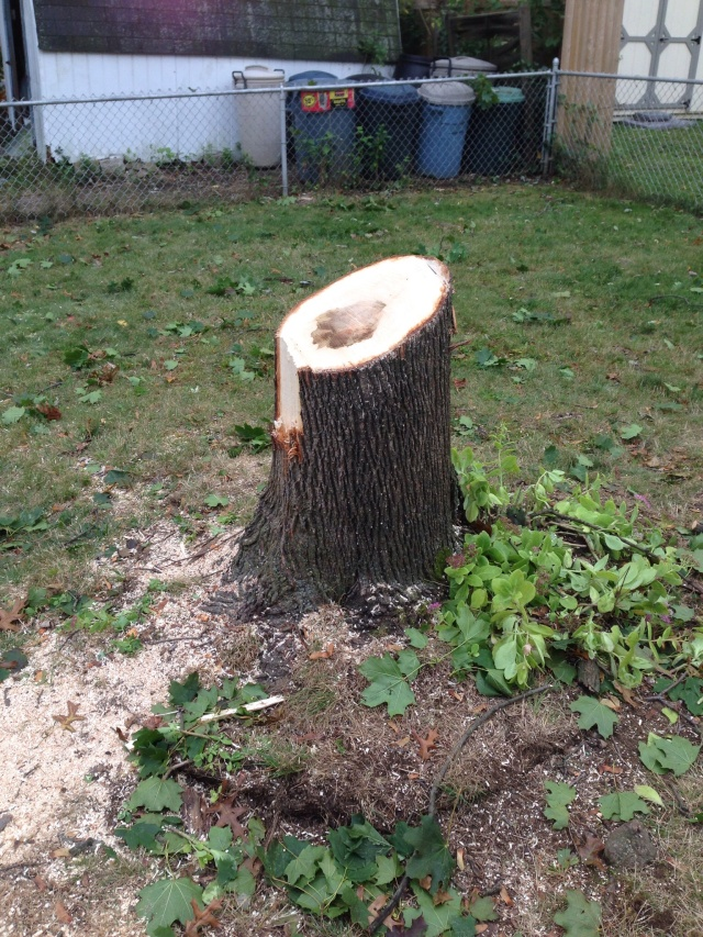 The little stump that was left.